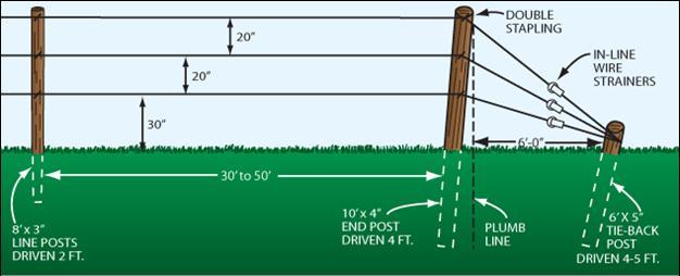 Three Wire Verticle Trellis